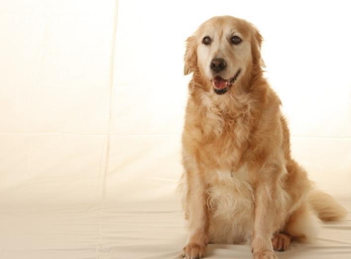 狗狗突然后腿发抖是怎么回事?狗狗后腿发抖的原因